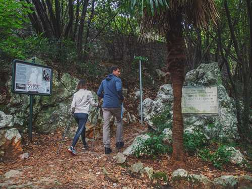 Carmen Sylva forest promenade – Take a walk along forest paths